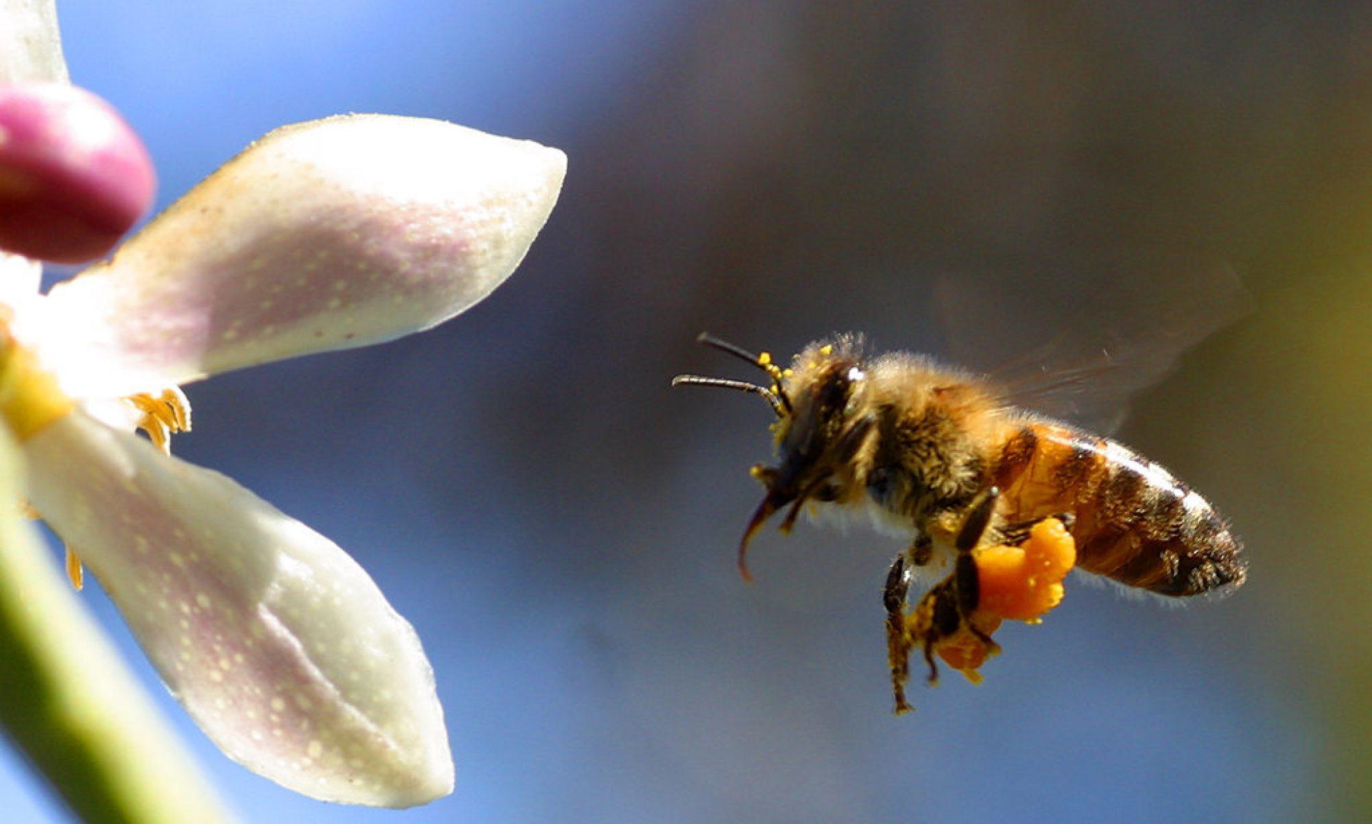 Kasseler Bio-Honig